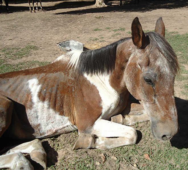 Cavalo é resgatado após denúncia de maus-tratos em Cruzmaltina, PR