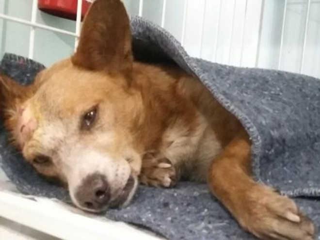 Cão é resgatado depois de ser jogado do alto de ponte em Curitiba, PR