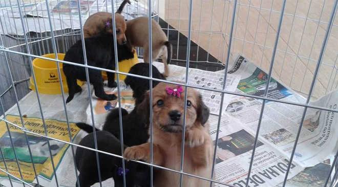 Boulevard sedia feira de adoção de cães e gatos no domingo em Londrina, PR