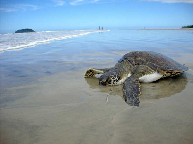 Plano de Ação vai apoiar resgate de animais marinhos no Litoral do Paraná