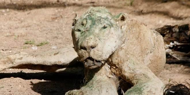 Palestina Gaza animais abandonados viraram estatuas1
