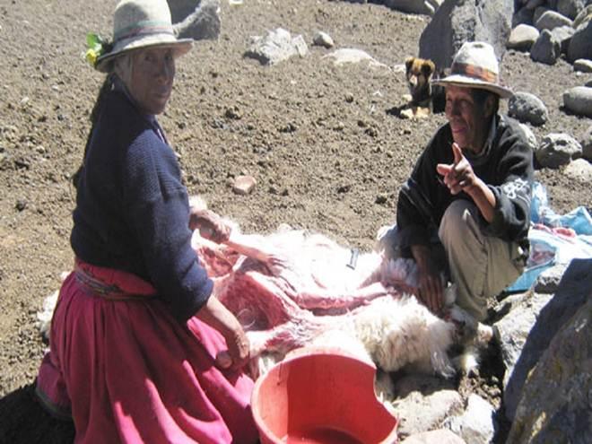 Frio, geada e neve matam 14 mil animais em Arequipa, Peru