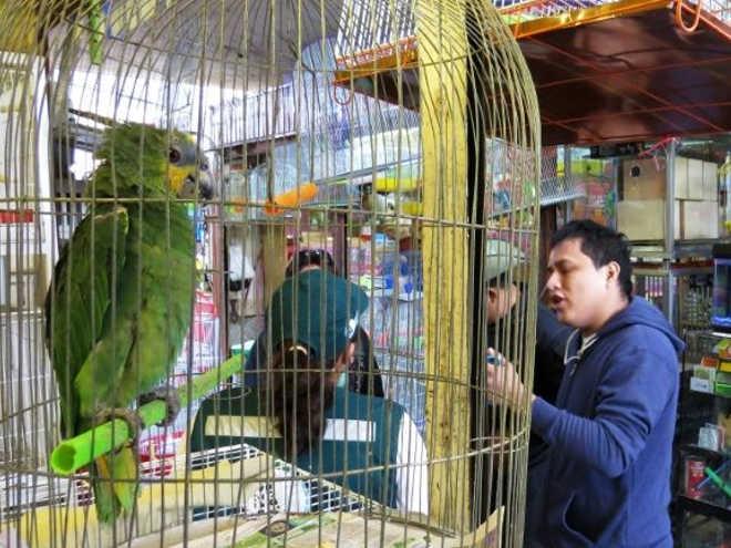 O negócio cruel do tráfico de animais silvestres no Peru