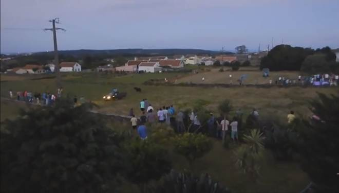 Vídeo: Touro atropelado de forma intencional nos Açores, Portugal