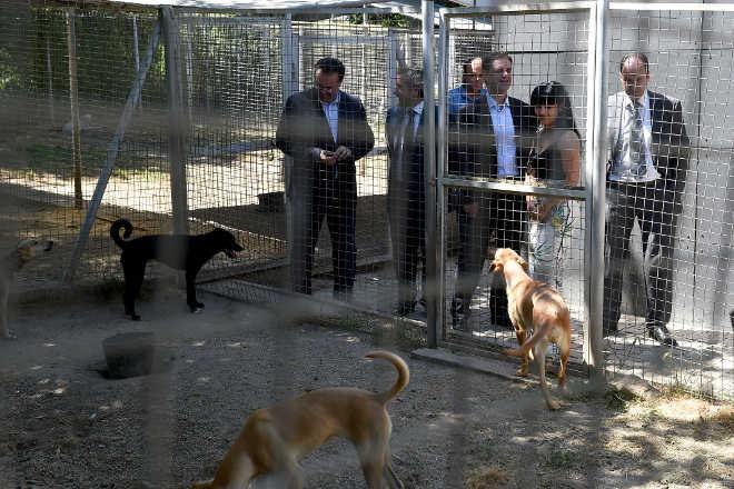 Portugal: Município de Braga alarga Centro de Recolha de Animais e introduz esterilização