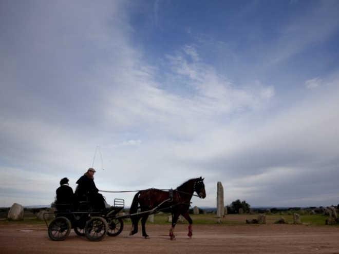 Portugal: PAN quer proibir uso de carroças e charretes na via pública