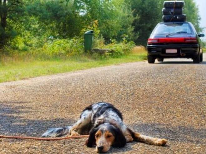 Portugal: no canil municipal de Portalegra, férias é sinónimo de abandono, só em junho entraram 16 cães