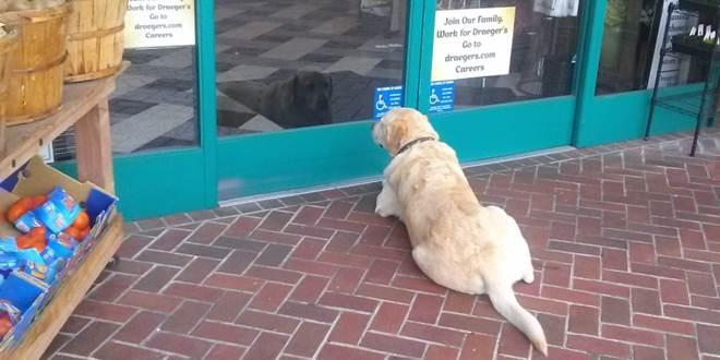 Petição defende acesso dos cães a estabelecimentos comerciais em Portugal