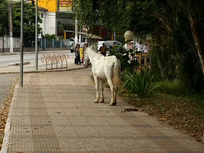 Cavalo andando solto na rua é flagrado em Volta Redonda, RJ