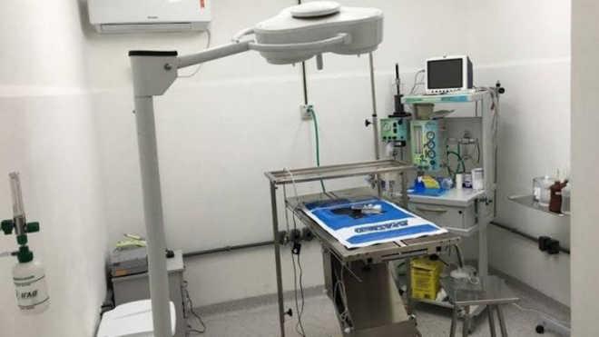 Hospital veterinário popular oferece até 50% de descontos para cães e gatos, no Rio de Janeiro