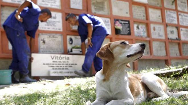 Lei permite o sepultamento de animais nos cemitérios públicos do Rio