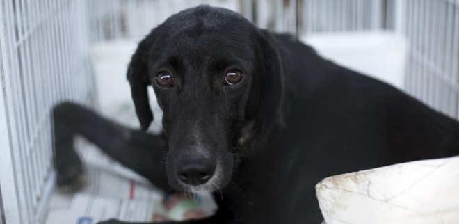 Vítimas de violência, cães baleados em tiroteios no Rio esperam adoção