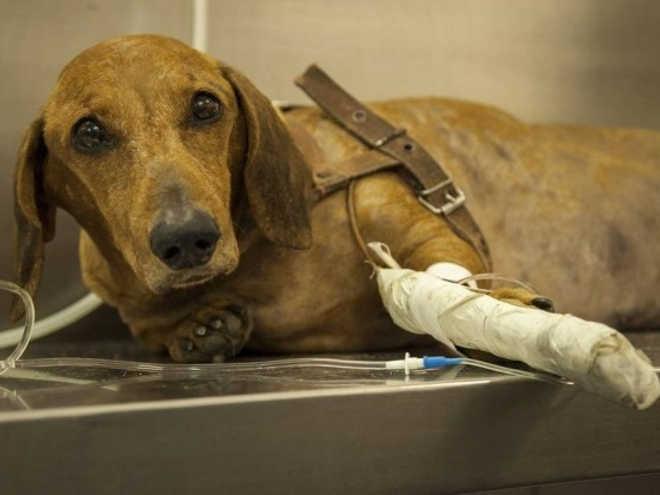 Suipa registra aumento de abandono de animais de estimação no Rio