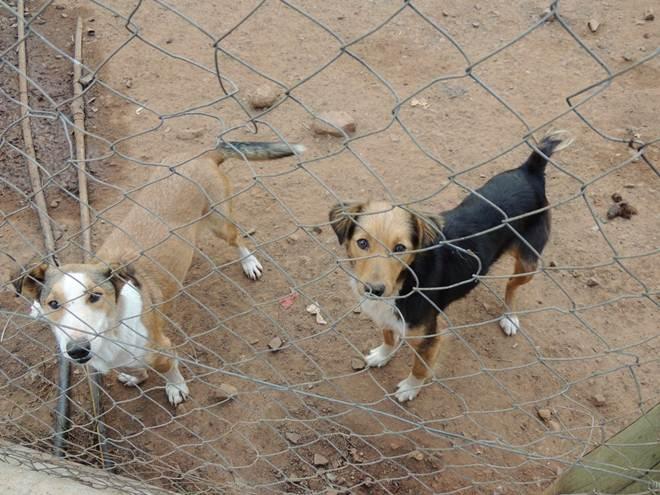População mais consciente, fiscaliza e denuncia maus-tratos aos animais em Alegrete, RS