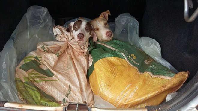 PRF apreende armas e encontra cães dentro de sacos em Coronel Bicaco, RS