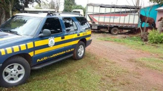 PRF retira equinos da BR 158, em Cruz Alta (RS), e alerta sobre responsabilidade