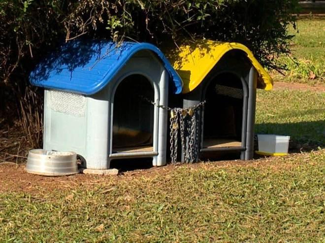Casinhas de cachorro em praça no RS geram polêmica entre moradores