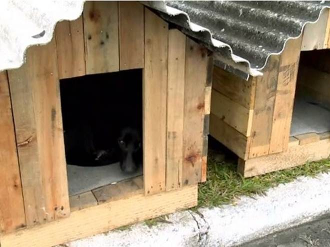 Presos trabalham na montagem de casas para cães de rua em Pelotas, RS