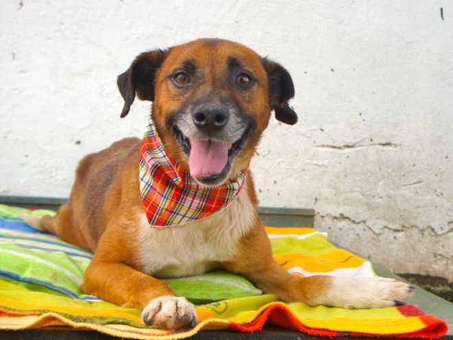 Porto Alegre (RS) terá feira para adoção de animais resgatados de atropelamentos no sábado