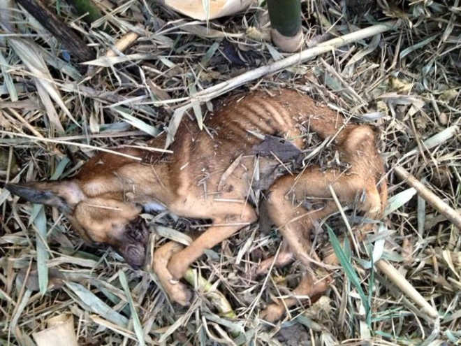 Cachorro encontrado em residência morre por falta de alimentação