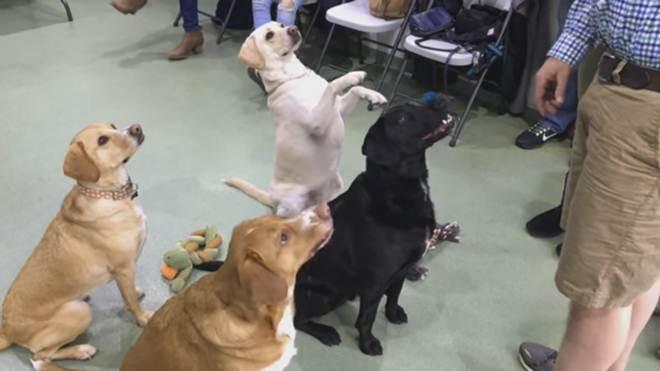 Reunião de cães após quatro anos de separação emociona redes sociais