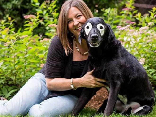 Cão com vitiligo vai ajudar crianças com a mesma doença a lidar com preconceito