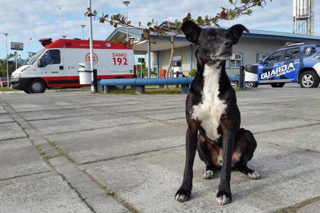 Cão espera há oito meses tutor que morreu no hospital em Balneário Camboriú, SC