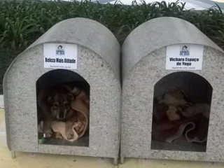 Projeto consegue casinhas para cães de rua em Braço do Norte, SC