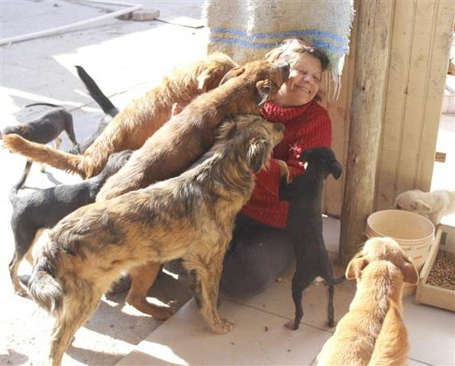 Um amor dividido entre 60 cães