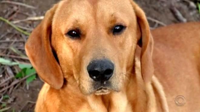 PM diz que policial matou cão de família 'pois não teve outra alternativa'