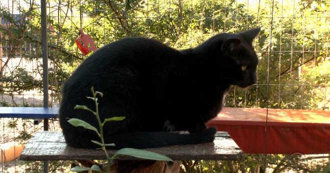 Após morte de tutora, campanha em Joinville (SC) busca lar para 40 gatos