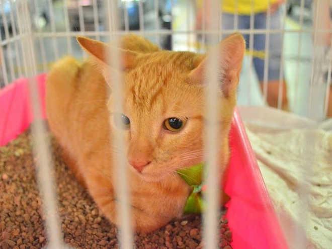 Feira em São José (SC) tem 40 animais para adoção neste fim de semana