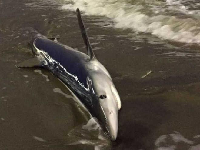 Empresário que salvou tubarão diz não ter pensado no risco: 'Quis ajudar'