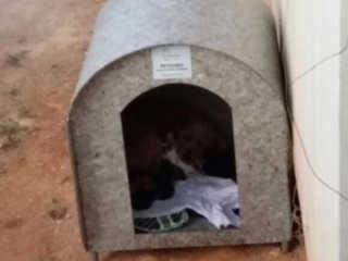 ONG repõe casinhas para animais abandonados furtadas em Orleans, SC