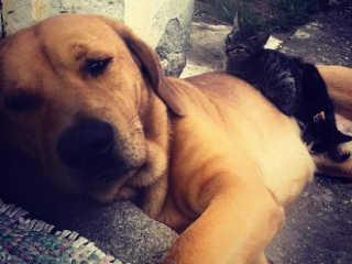 Cachorro é morto a tiros por policial ambiental no Sambaqui, em Florianópolis, SC