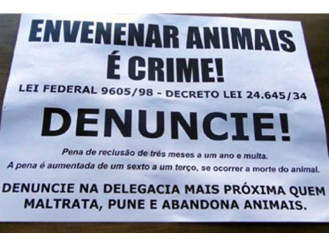 População denuncia mortes de animais por maus-tratos e envenenamento em Imbituba e Gravatal, SC
