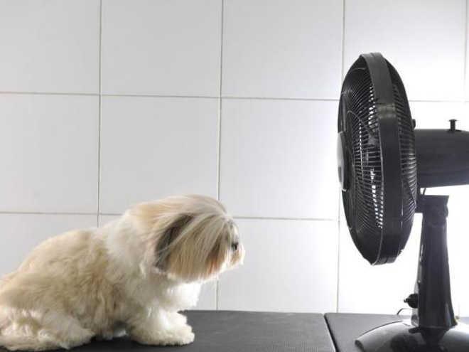 De farmácia popular para bichos a câmeras em pet shops, veja projetos de lei em favor dos animais em SC