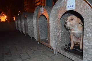 Casinhas de cachorros são furtadas em Orleans, SC