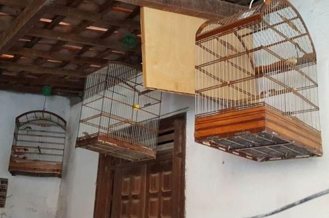 PM apreende aves silvestres em casa do Santos Dumont, SE