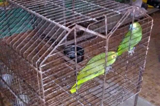 PM flagra três aves mantidas ilegalmente em cativeiro no Mosqueiro em Aracaju, SE