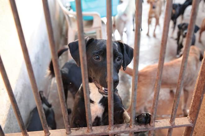 Crise afeta doações para ONGs de proteção aos animais no interior de SP