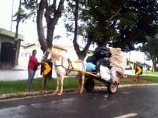ONG de Araras (SP) faz abaixo-assinado contra maus-tratos a animais de carga