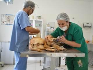 Setor de Zoonoses de Arujá (SP) cadastra cães machos e fêmeas para castração