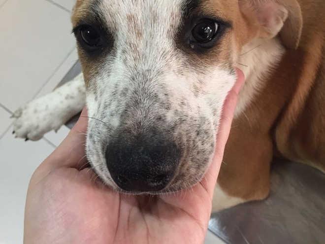 Crise reduz doações e instituições deixam de recolher animais de rua em Campinas, SP
