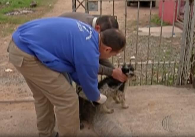 Cidades do Alto Tietê vacinam animais contra a raiva