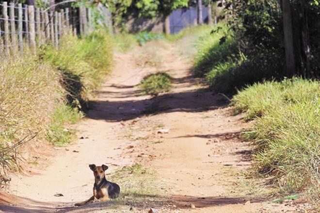 Bairros rurais de Franca (SP) viram 'depósito' de animais