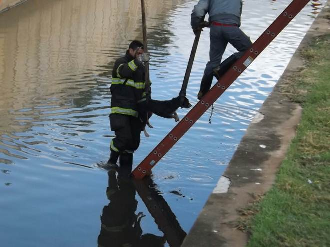 Corpo de Bombeiros resgata dois cachorros em córrego de Hortolândia, SP