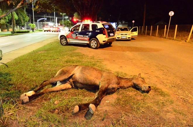 Cavalo morre e é deixado na Avenida Presidente Vargas, em Indaiatuba, SP