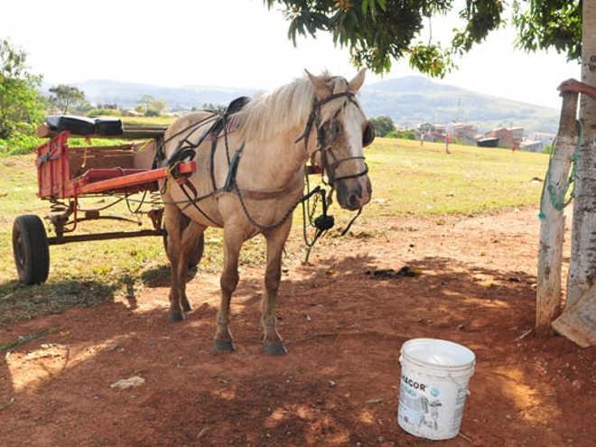 Projeto quer proibir circulação de veículo com tração animal em Limeira, SP
