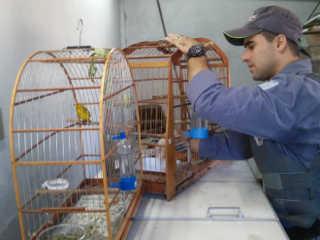 Polícia Militar Ambiental resgata pássaros irregulares mantidos em recinto estressante em Marília, SP